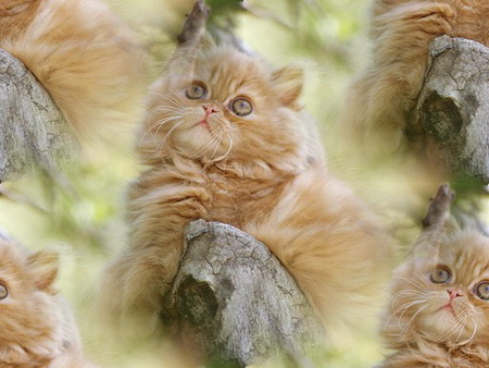 Animals_Cats__004472_ (450x338, 62Kb)