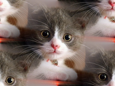 Animals_Cats_Small_cat_005241_ (450x338, 84Kb)