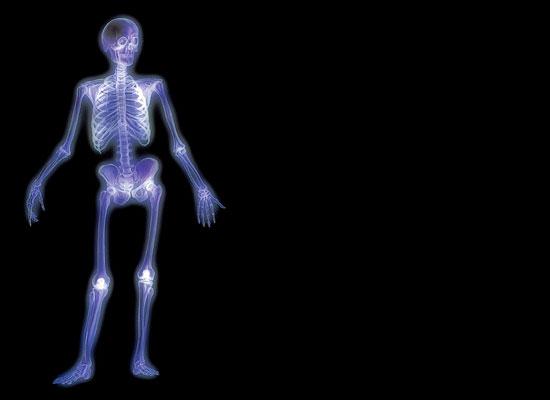 скелет (550x400, 14Kb)