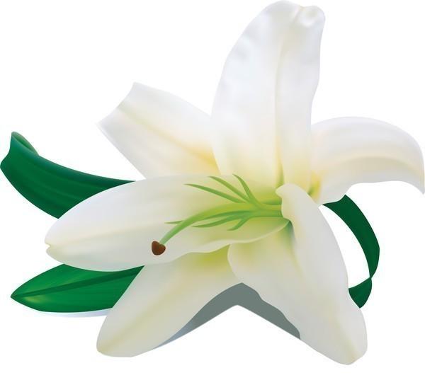 Белый цветок 4 буквы