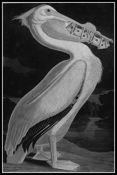 Magic-Pelican (403x600, 72Kb)