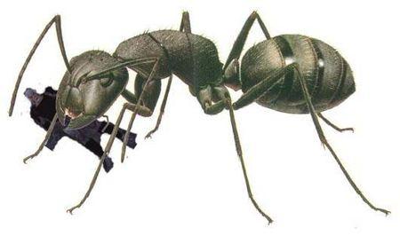 ant01 (450x266, 26Kb)