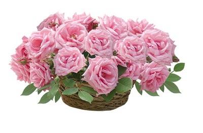 розовые розы в корзине (400x263, 28Kb)