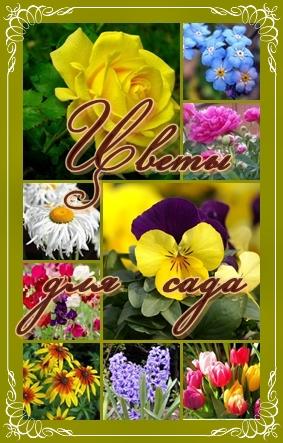 цветы для сада (283x443, 142Kb)