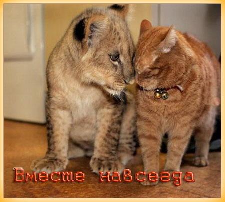 cat-&-leo (450x404, 79Kb)