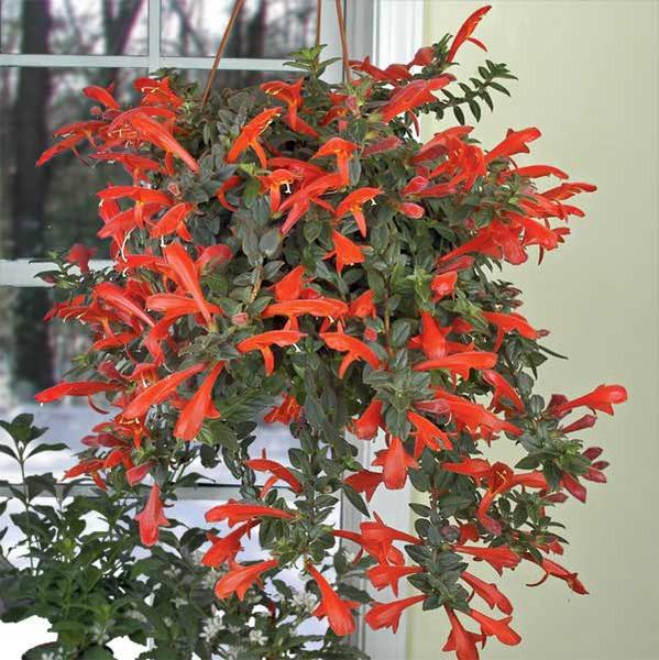 вьющиеся цветы из бисера - О том, как плести бисером.