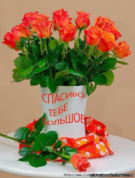 71887865_58232477_spasibo_tebe_bolshoe (455x600, 154Kb)