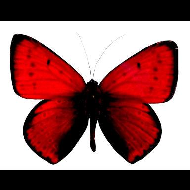 redbutterflymask (384x384, 22Kb)