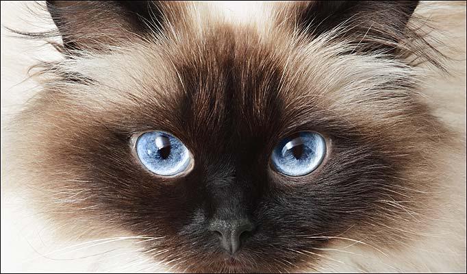 2222299_cat_eyes-682_739352a (682x400, 61Kb)