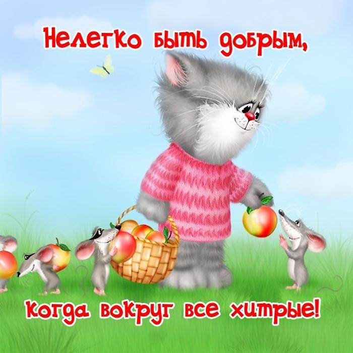 Прикольные истории о котах - Страница 3 73352370_5865