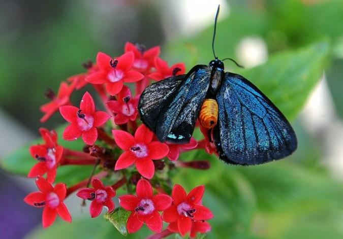 Теги. бабочки. p. В Москве на одной из таких выставок в 2007 году в первый же день погибли около 200 бабочек...