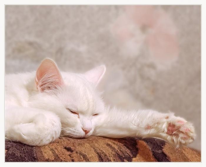 Что снится кошкам