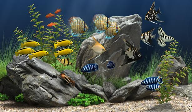 3424885_portable_dream_aquarium_v1234__21_akvarium_870051 (615x360, 51Kb)