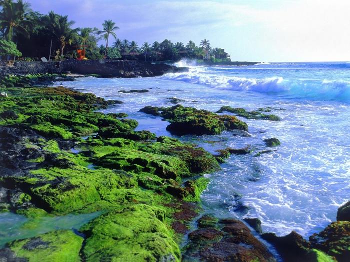 3935767_Kona_Coast_Big_Island_Hawaii (700x525, 366Kb)