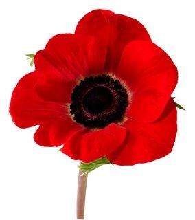 poppy (284x320, 11Kb)