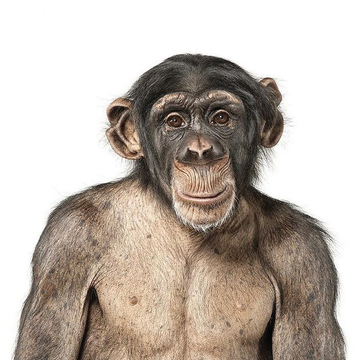 Портреты животных от Andrew Zuckerman