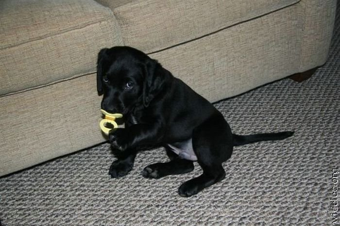 Милые щеночки 1276618210_cute_puppies_01 (700x465, 80Kb)