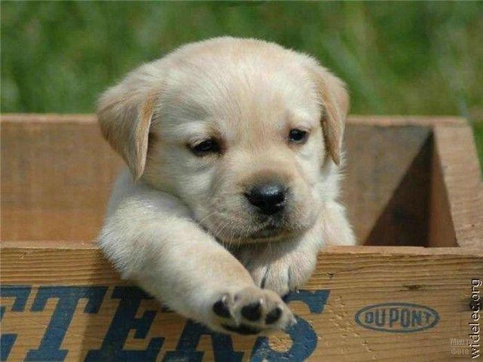 1276618214_cute_puppies_32 (700x525, 56Kb)