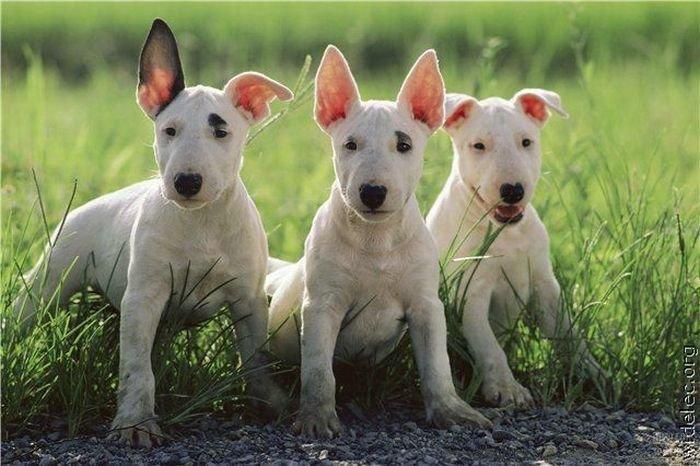 1276618229_cute_puppies_19 (700x466, 70Kb)