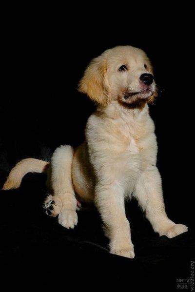 1276618237_cute_puppies_38 (400x600, 21Kb)