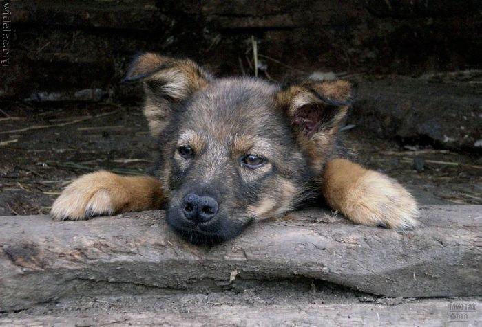 1276618239_cute_puppies_91 (700x476, 74Kb)