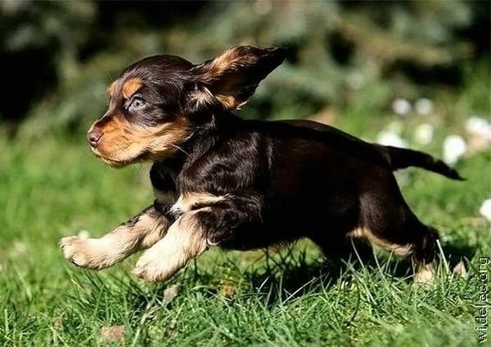 1276618256_cute_puppies_110 (700x495, 76Kb)