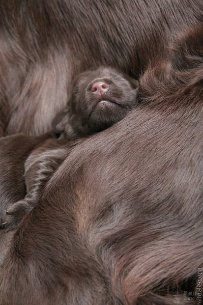 1276618268_cute_puppies_82 (399x600, 54Kb)