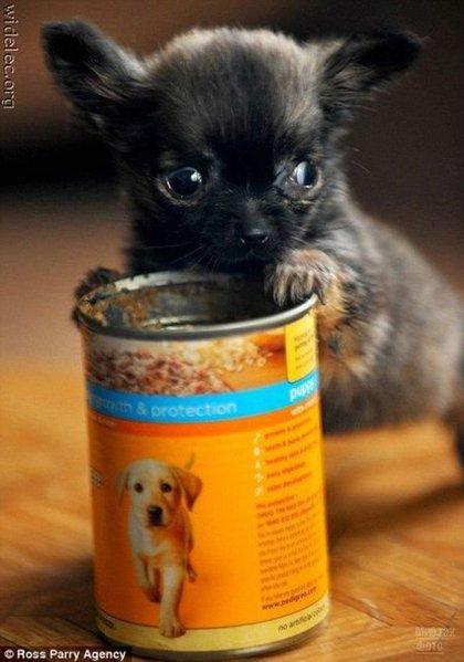 1276618277_cute_puppies_06 (420x600, 43Kb)