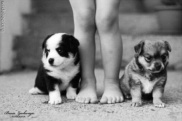 1276618278_cute_puppies_31 (700x468, 63Kb)
