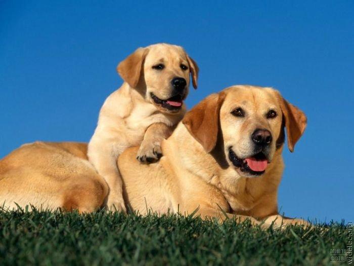1276618279_cute_puppies_90 (700x525, 48Kb)