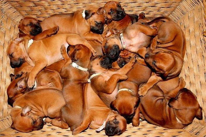 1276618282_cute_puppies_14 (700x467, 96Kb)