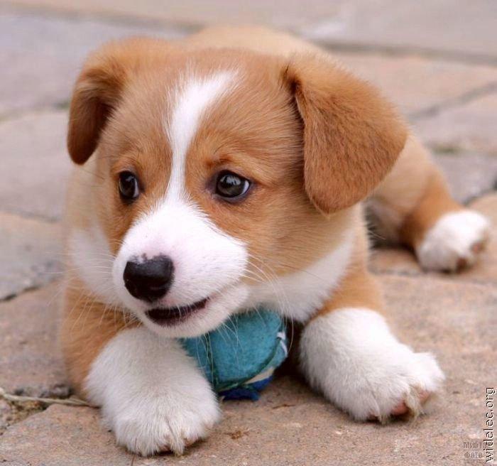 1276618292_cute_puppies_46 (700x656, 61Kb)