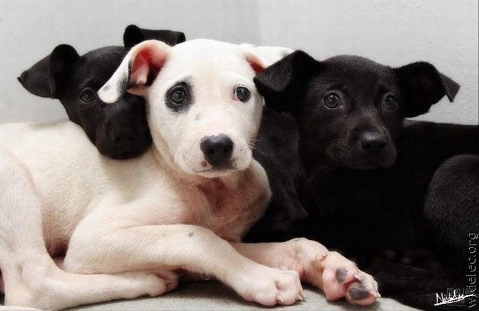 1276618300_cute_puppies_21 (700x455, 46Kb)