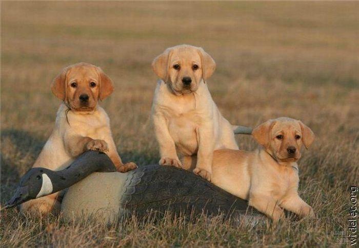 1276618304_cute_puppies_48 (700x485, 53Kb)