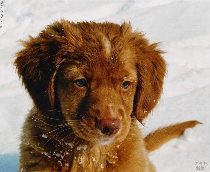 1276618309_cute_puppies_39 (700x573, 67Kb)