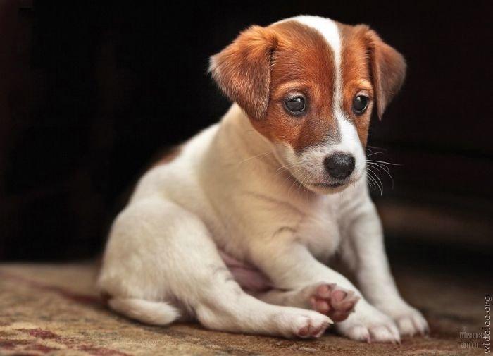 1276618322_cute_puppies_62 (700x505, 40Kb)