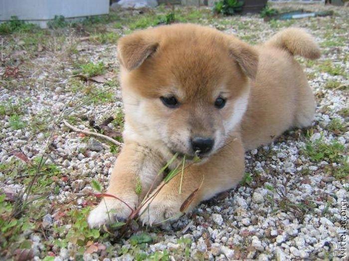 1276618338_cute_puppies_92 (700x525, 99Kb)
