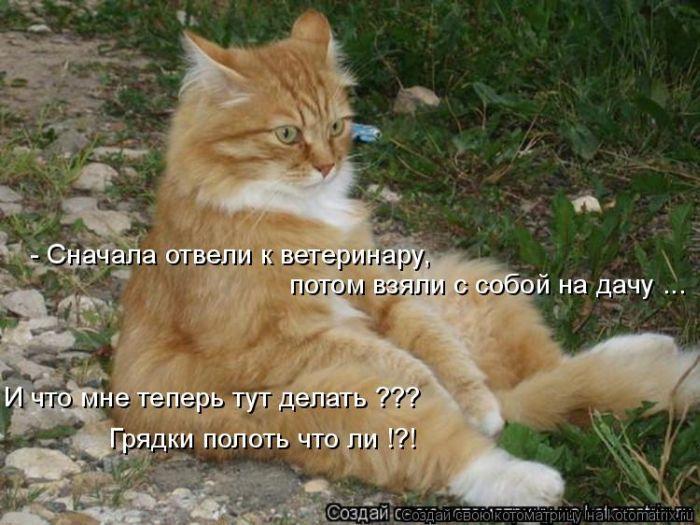 Котоматриця!)))) - Страница 2 73409762_3105276_kotomatrix_36