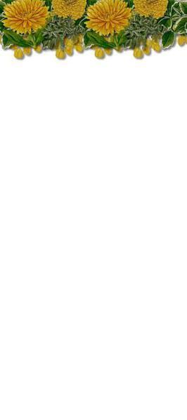 chrysant20 (266x600, 8Kb)