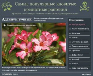 Рубрики цветы в доме домашний огород