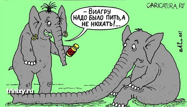 4171694_sloni_karikatyra (600x343, 51Kb)