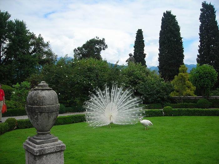 Дворец Борромео ( итал. Isola Bella - красивый остров ) 82970