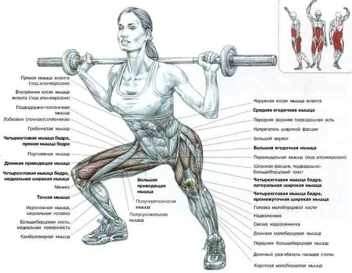 мышцы (699x544, 47Kb)