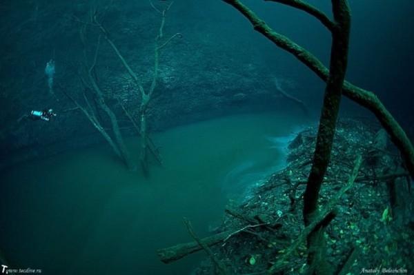 подводная соленая в Черном море (600x399, 110Kb)