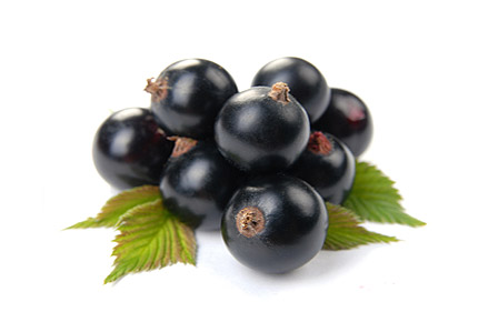 Черная смородина- правила ухода.  Вредители и болезни смородины. и крыжовника.  Размножение смородины черенками.