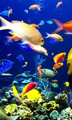 HD картинка Царство рыб 240x320 КПК.  HD картинки на рабочий стол.