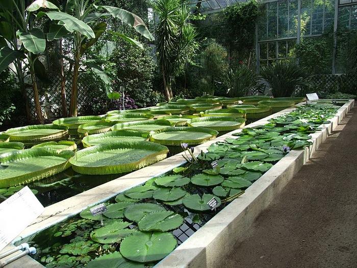 Сады Виллы Таранто 10372
