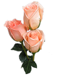 http://img0.liveinternet.ru/images/attach/c/2/73/532/73532148_73287854_0_561c4_8e9f516d_S.png