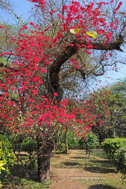 bloom_tree (432x650, 172Kb)