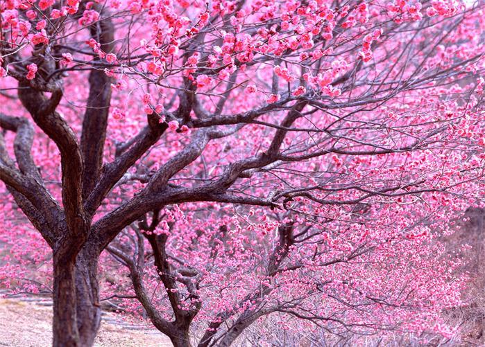 spring1_800 (700x501, 278Kb)